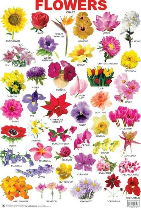 epingle par sandrine lagazelle sur english fleur en