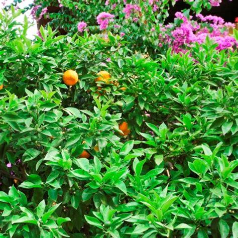 giardini di italia italia immagini e foto giardini di tutta l italia