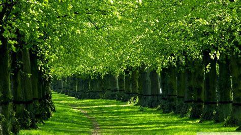 green nature wallpaper hd wallpapers lzamgs green hd