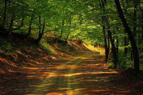 road forest nature  photo  pixabay
