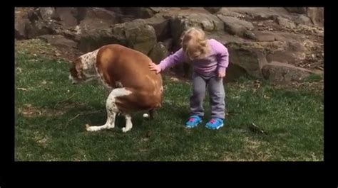 how to break dog from pooping in the house too funny little girl congratulates her dog on pooping