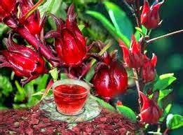 Teh Merah mobilisasi usaha teh merah