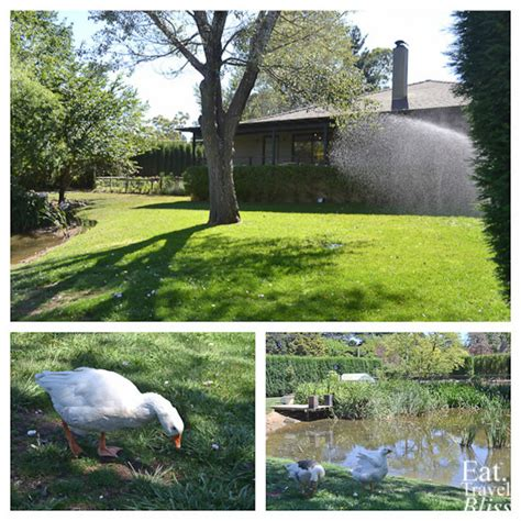 Permalink to Outdoor Pond Fish Nsw – Garden Ponds and Fish Ponds for Sydney and NSW