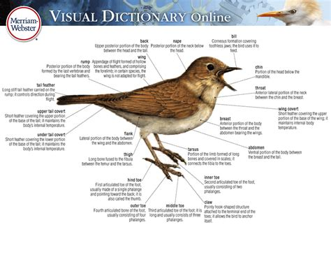 Working Online From Home Definition - about the visual overview visual dictionary online