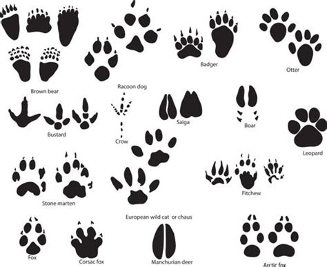 tattoo animal paw print all about tattoo that you must know december 2013