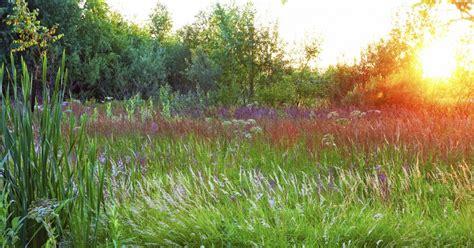 Der Perfekte Garten by Der Perfekte Abend Garten Mein Sch 246 Ner Garten