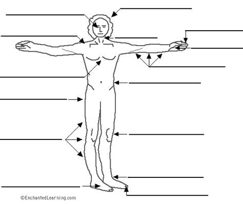 printable label body parts label the body el cuerpo in spanish printout