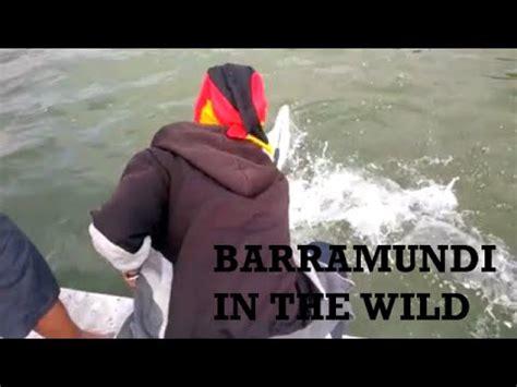 Kaos Mancing Large Bass mancing liar di papua mancing mania fishing barramundi and black bass