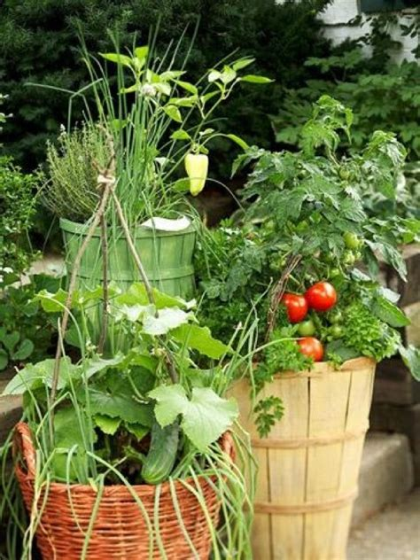 container vegetable gardens container vegetable gardening www imgkid the image