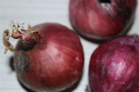 onion hu images reverse search onion free stock photos download 177 free stock photos