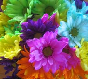 colorful flower flowers with soul colorful nature