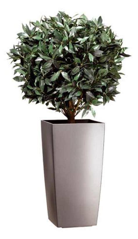 arbres plantes comparez les prix pour professionnels sur hellopro fr page 1