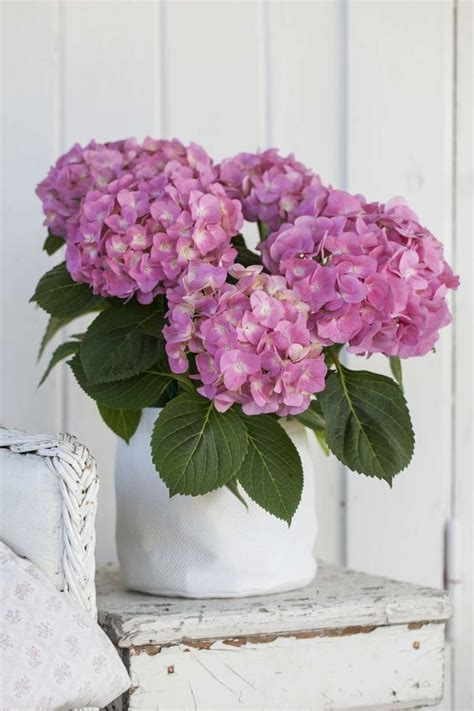 blue hydrangea flower arrangements 1000 ideas about hydrangea arrangements on