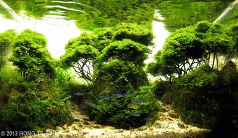 aquascapes com 2013 aga aquascaping contest 377