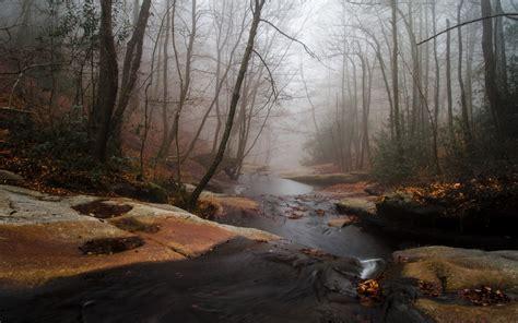 foggy forest creek rocks wallpapers foggy forest creek