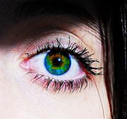 eye color mutations 17 best images about unique mutations i on