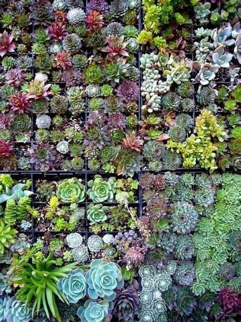 Succulent Vertical Garden by Jardin Vertical Suculentas Roof Garden