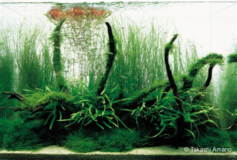 aquascaping with driftwood driftwood q a with takashi amano