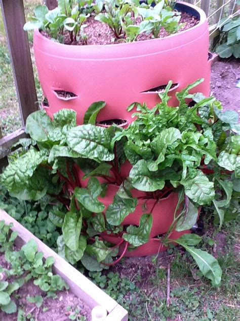 Plastic Barrel Strawberry Planter by How To Make A Barrel Garden That Saves Space From Junk