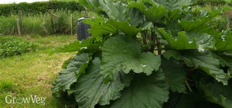 Plan For The Hungry Gap With These 5 Easy Perennials Perennial Garden Vegetables