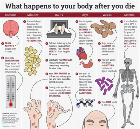 body biography definition have you ever wonder what happens to the body after death