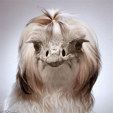 In A by Ostrich In A Wig Pictures