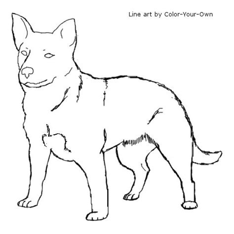 how to cattle dogs how to draw a blue heeler breeds picture