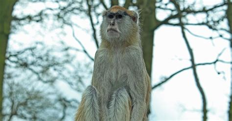 discount vouchers woburn safari park thirteen monkeys killed in early morning fire at woburn