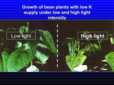 Potassium In Plant Growth And Yield