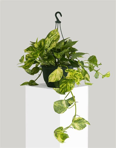 Houseplants For Low Light Areas 20 air purifying plants for your interior
