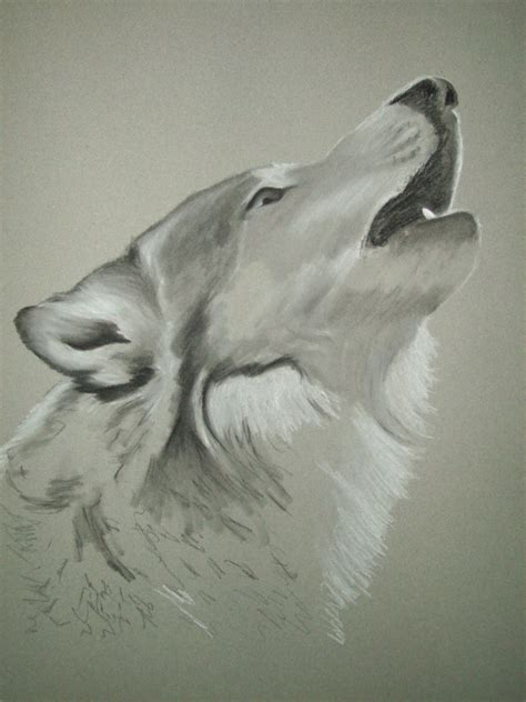 im 225 genes de un lobo gris im 225 genes y fotos imagenes de lobos aullando dibujos de lobos aullando imagui