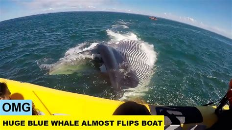 biggest tourist boat in the world omg huge blue whale almost flips tourist boat in quebec