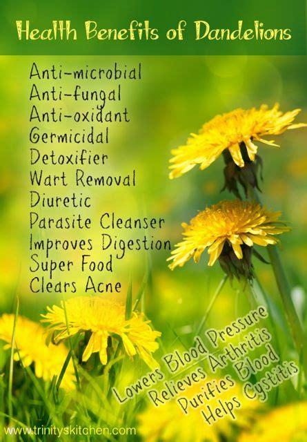 Roasted Dandelion Root Tea Detox Recipe by Best 25 Dandelion Tea Detox Ideas On