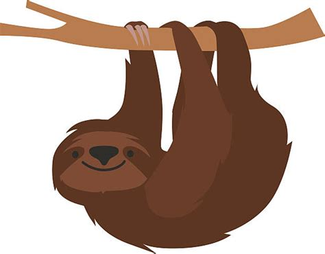 sloth clipart sloth clipart pencil and in color sloth clipart