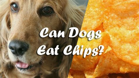 can dogs eat potato chips can dogs eat chips pet consider