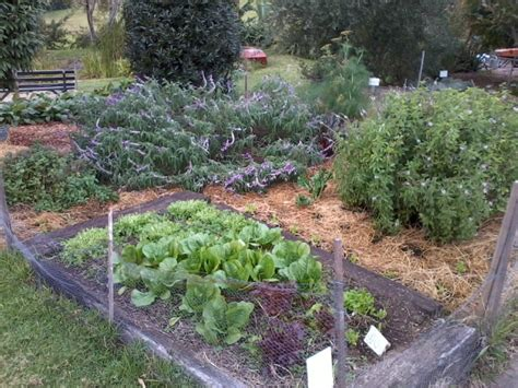 permaculture vegetable garden permaculture vegetable gardens and composting call