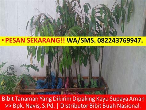 Bibit Jambu Air Dalhari Jogja wa sms 082243769947 jual bibit durian musang king bogor