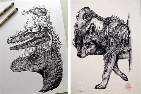 stunning drawings  animal skeletons  paul jackson