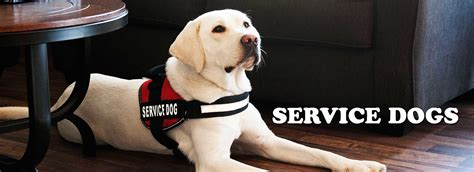 best dogs to as service dogs industrial puppy we sell the best quality service vests therapy vests and in