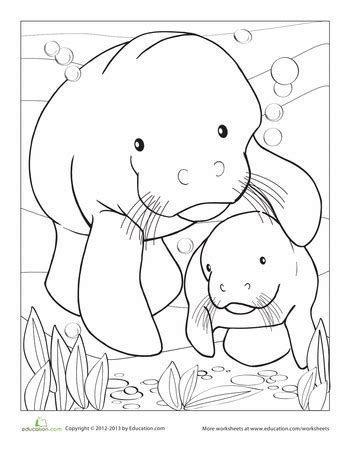 manatee coloring page manatee worksheets  craft