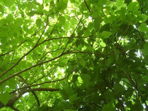 Quel Arbre Planter Dans Jardin by Par Contre Effet Et Jeux De Lumiere Garantit