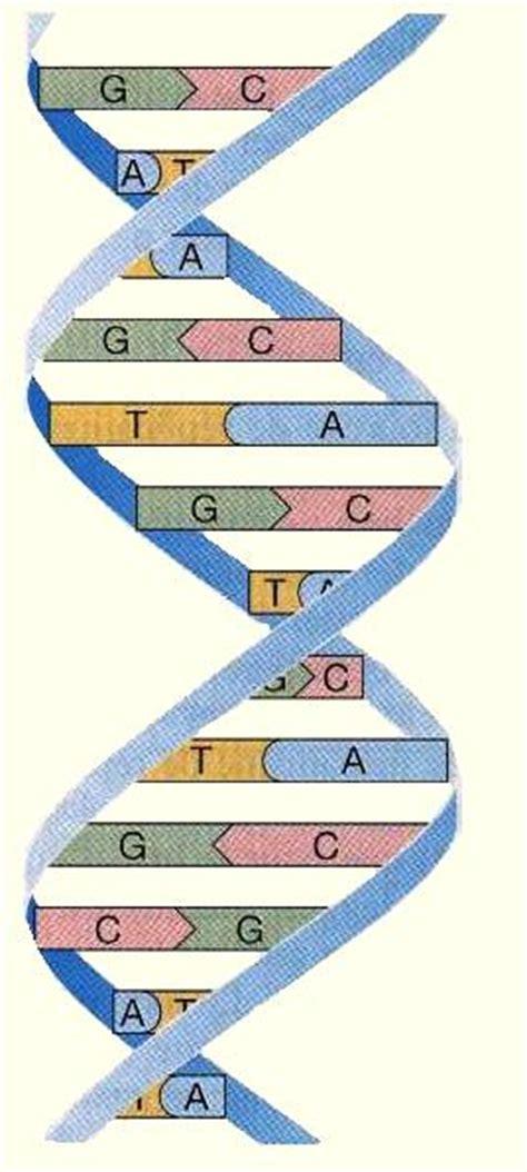 0876122683 affirmations scientifiques de guerison l adn humain est un internet biologique n 233 oconscience
