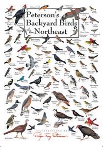 foldingguides peterson s backyard birds of the