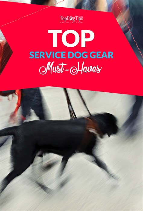 puppy must haves service gear must haves what s most important for owners top tips