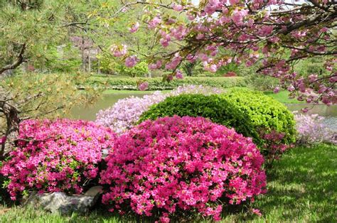 azalea bushes evergreen azalea flowers things i grew up pinterest azalea bush