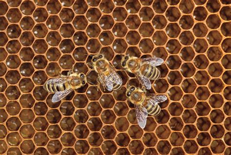 geometric pattern found in nature why nature prefers hexagons biology physics 171 adafruit