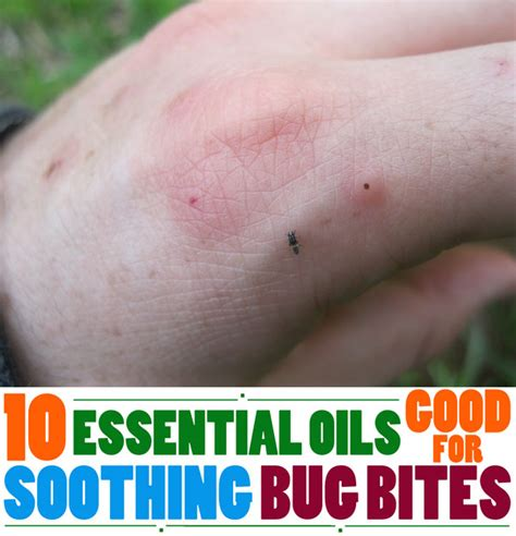 does lavender kill bed bugs does lavender oil kill bed bugs lavender and bed bugs img