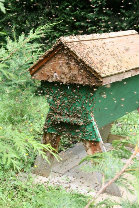 diy top bar beehive the swarm saga continues honey bee suite