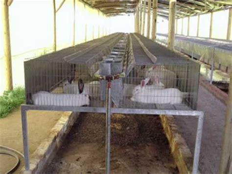 jaulas conejeras industriales instalaciones para conejos