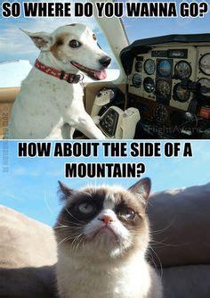 Tard The Cat Meme - 1000 images about tard on pinterest grumpy cat grumpy